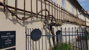 Mariborban található a legrégibb szőlőtőke a világon!