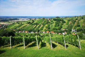 Új bor született Lendván!
